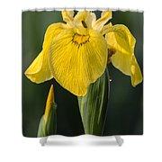 Wild Yellow Iris Shower Curtain