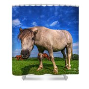 Wild Young Horse On The Field Shower Curtain