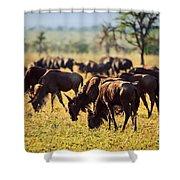 Wildebeests Herd. Gnu On African Savanna Shower Curtain