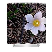 Wildflower Among Pine Needles Shower Curtain