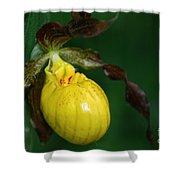Wildflower Lady Slipper Shower Curtain