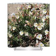 Wildflowers - Desert Primrose Shower Curtain