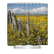 Wildflowers Surround Rustic Barb Wire Shower Curtain