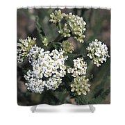 Wildflowers - White Yarrow Shower Curtain