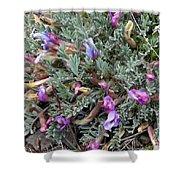 Wildflowers - Woolly-pod Locoweed Shower Curtain