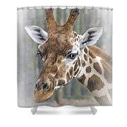 Wildlife Giraffe  Shower Curtain