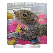 Wildlife Rehabilitation Shower Curtain