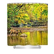 Wildlifes Thirst Shower Curtain