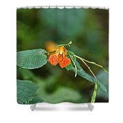 Wildly Orange Shower Curtain