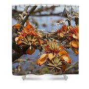 Wiliwili Flowers - Erythrina Sandwicensis - Kahikinui Maui Hawaii Shower Curtain