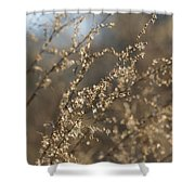 Will O Wisps Shower Curtain
