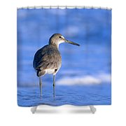 Willet In The Water Shower Curtain