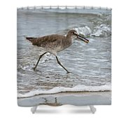 Willet With Mole Crab Shower Curtain