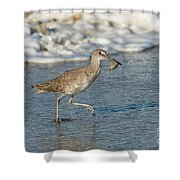 Willet With Sand Crab Shower Curtain