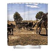 Williamson Valley Roundup 21 Shower Curtain
