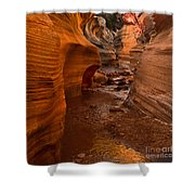 Willis Creek Slot Canyon Shower Curtain by Robert Bales