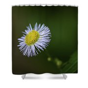 Willow Aster Shower Curtain