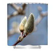 Magnolia Buds Shower Curtain