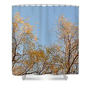 Willows And Sky Shower Curtain