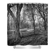 Willows In Spring Park Shower Curtain