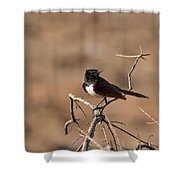 Willy Wagtail V7 Shower Curtain