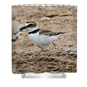 Wilsons Plover At Nest Shower Curtain