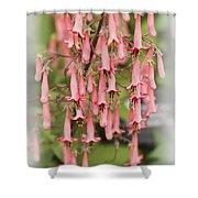 Winchester Fanfare Shower Curtain