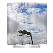 Wind-bent Flag Tree In Tierra Del Fuego Shower Curtain