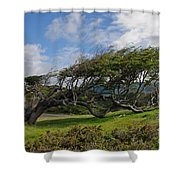 Wind-bent Tree In Tierra Del Fuego Patagonia  Shower Curtain