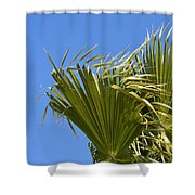 Wind In The Palm Shower Curtain
