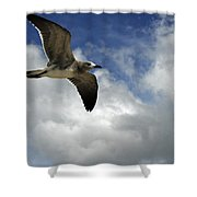 Wind Of The Day  Shower Curtain