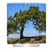 Lonesome Pine Tree Shower Curtain