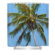 Windblown Coconut Palm Shower Curtain