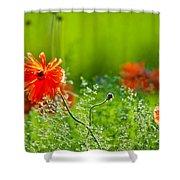 Windblown Poppies Shower Curtain