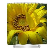 Windblown Sunflower One Shower Curtain
