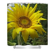 Windblown Sunflower Two Shower Curtain