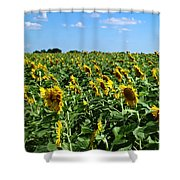Windblown Sunflowers Shower Curtain