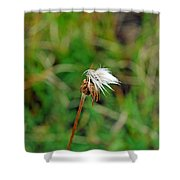 Winded White Shower Curtain