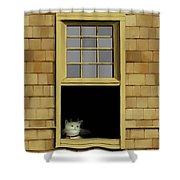 Window Cat    No. 2 Shower Curtain