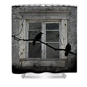 Window Dressing Shower Curtain