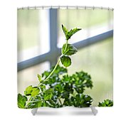 Window Herb Garden Shower Curtain