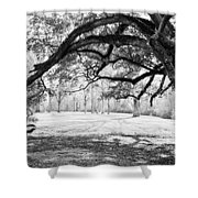 Window Oak - Bw Shower Curtain