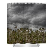 Windswept V3 Shower Curtain