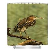 Windy Morn Green Heron Shower Curtain