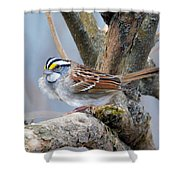 Windy Perch Shower Curtain