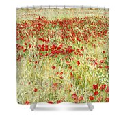 Windy Poppies At The Fields Shower Curtain