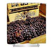 Wine Grapes II Shower Curtain