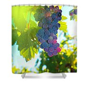 Wine Grapes  Shower Curtain by Jeff Swan