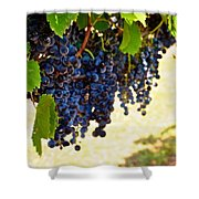 Wine Grapes Shower Curtain by Kristina Deane