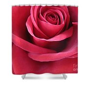 Wine Rose 3 Shower Curtain